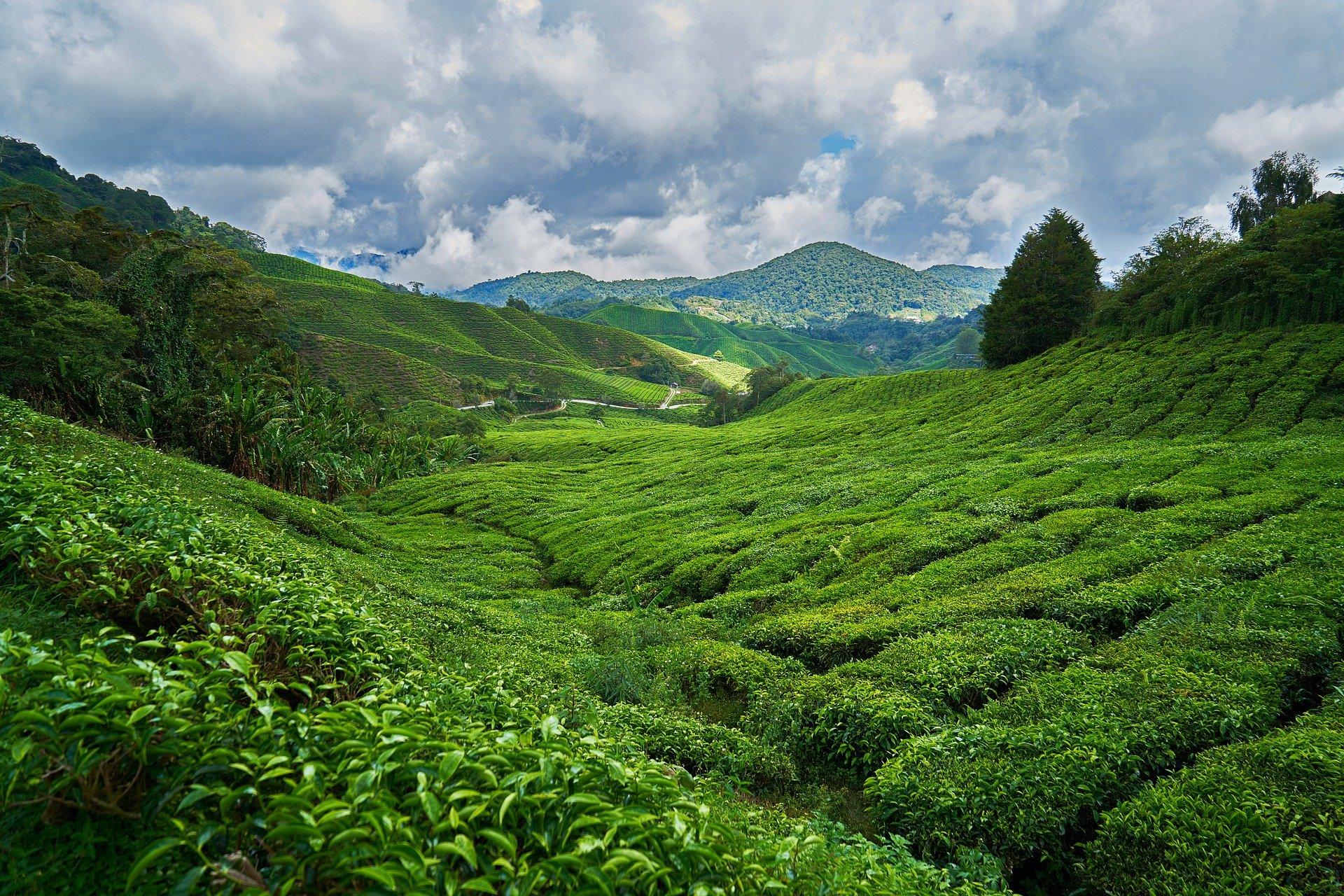 China Moganshan Travel