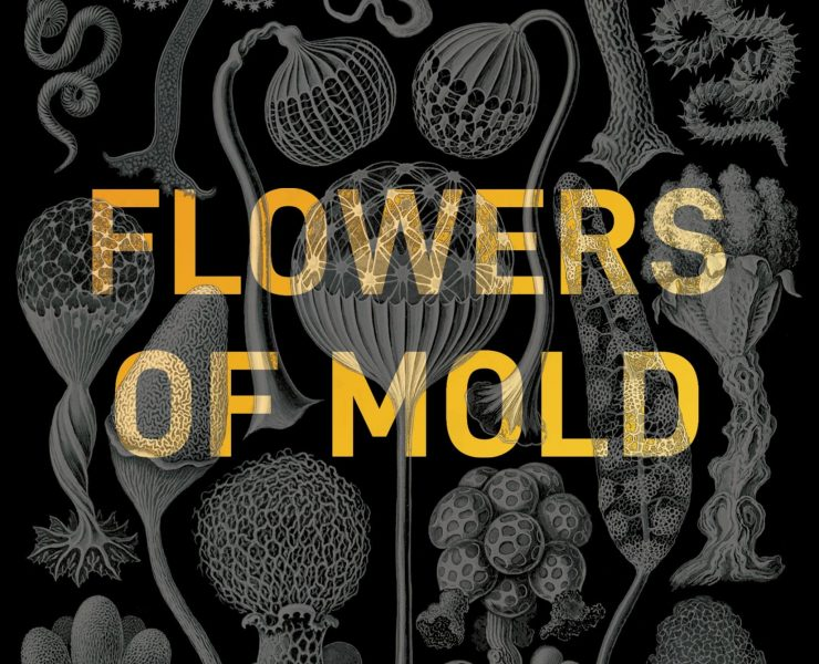 flowers of mold
