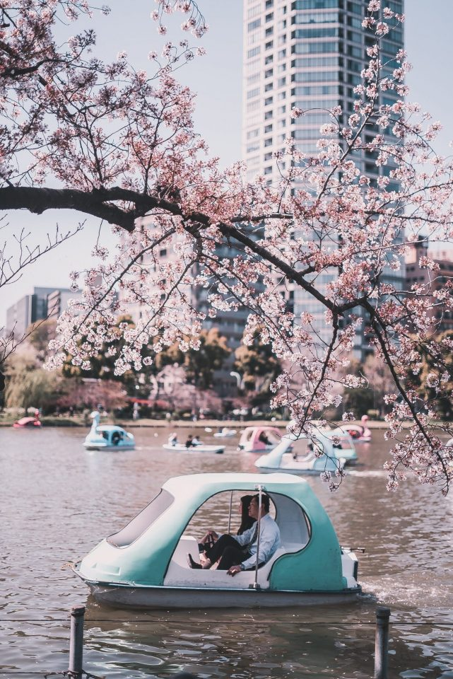 Parks in Tokyo to See the Changing Seasons