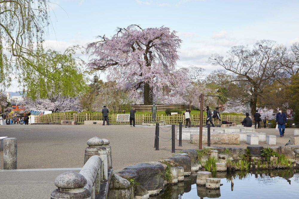 maruyama-park   A Day in Higashiyama Kyoto