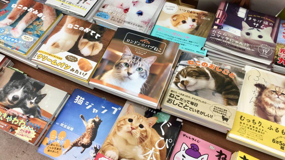 cat bookstore anegawa nyankodo