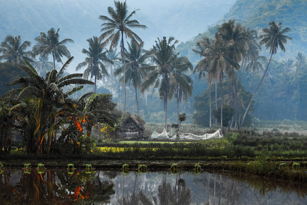 unique things to do in Bali